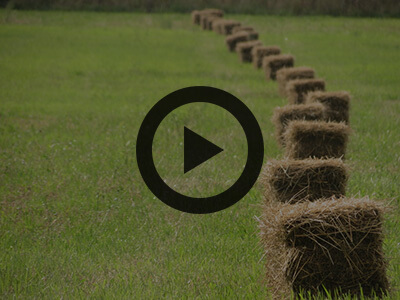 Slideshow - 2017 national forage review