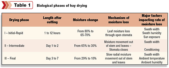 Biological phases of hay drying