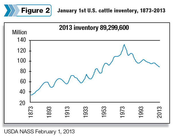 Cattle Inventory