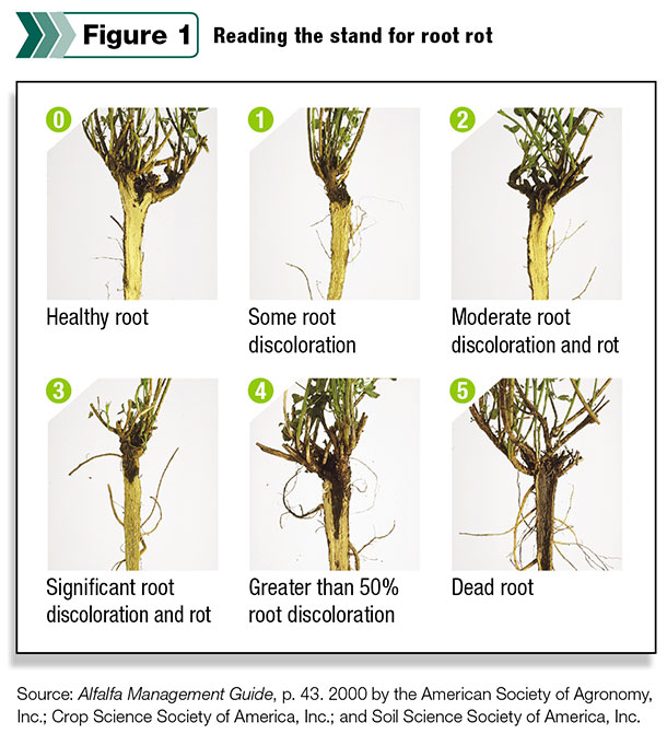 Reading the stand for root rot