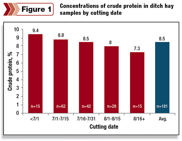 concentrations of crude protein in ditch hay