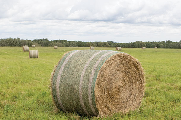 Round bales of grass