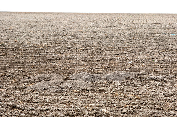 Gopher mounds can raise havoc with farm equipment