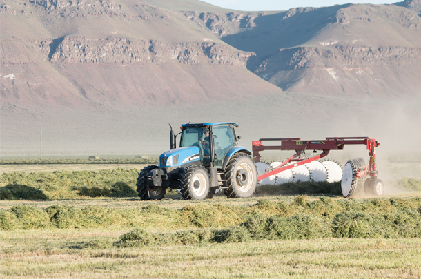 Fall alfalfa cutting management is critical