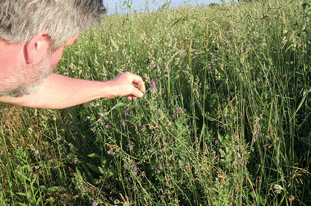 Dale Carter determines his perennial pasture is ready to graze