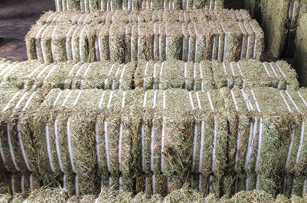 Pressed hay ready for export