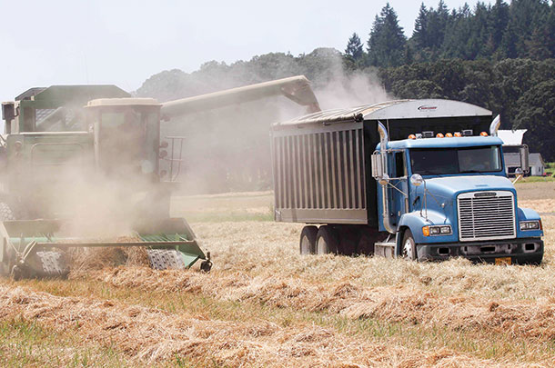 Combining during grass seed harvest