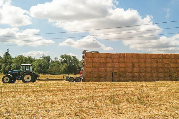 One of the employee staking bales of grass strew in the field