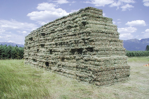Koch stacks his hay in a pyramid shape to aid in water runoff