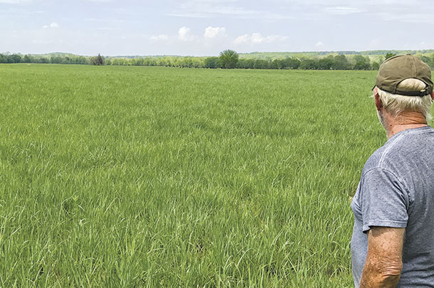 Tim Willis looking over his pasture of switchgrass