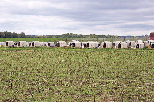 Cover crops and calf hutches