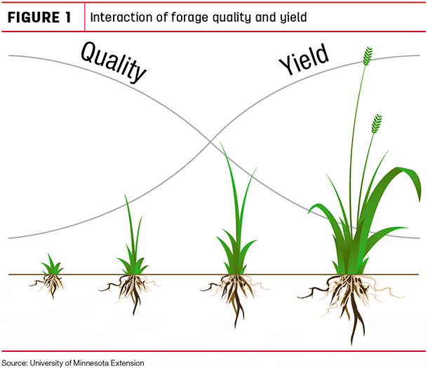Interaction of forage quality and yield