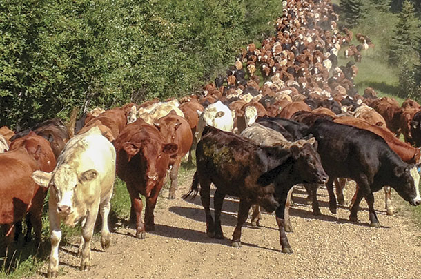 MOving cattle frequently to manage for soil health and biological diversity