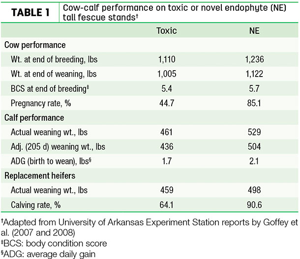 Cow-calf performance on toxic or novel endophyte