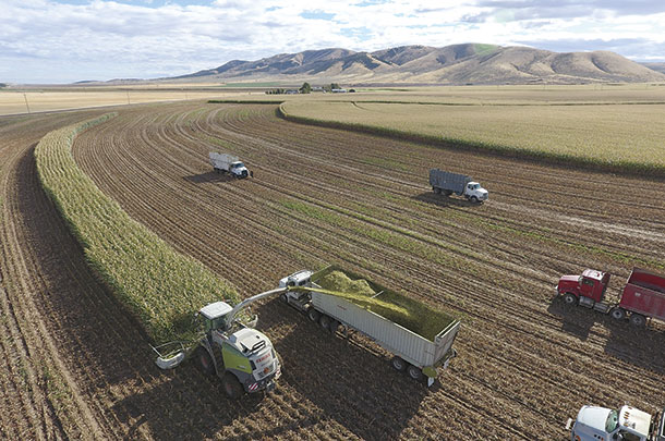 Silage harvest in the high desert of southern Idaho