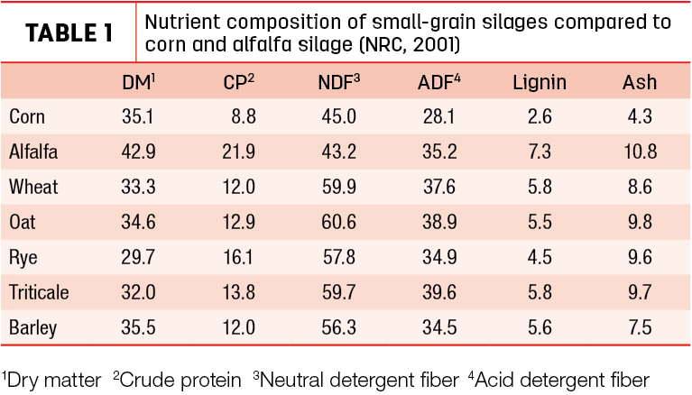 Nutrient composition of small-grain silages compared to corn and alfalfa silage
