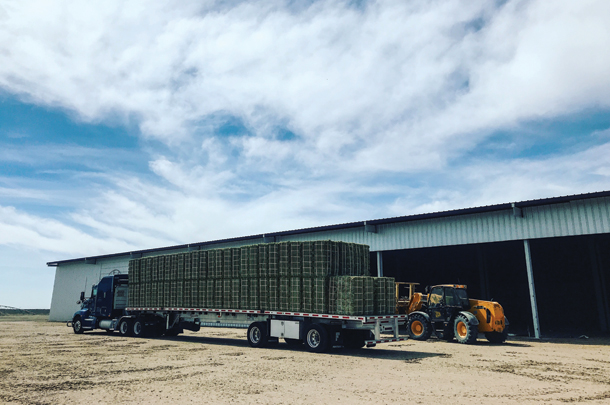 Truckload of hay ready to ship