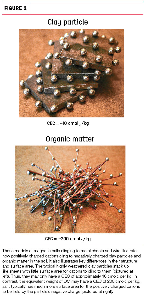 Clay particle and organic matter