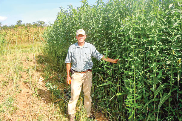 Richard Petcher standing next to sunn hemp