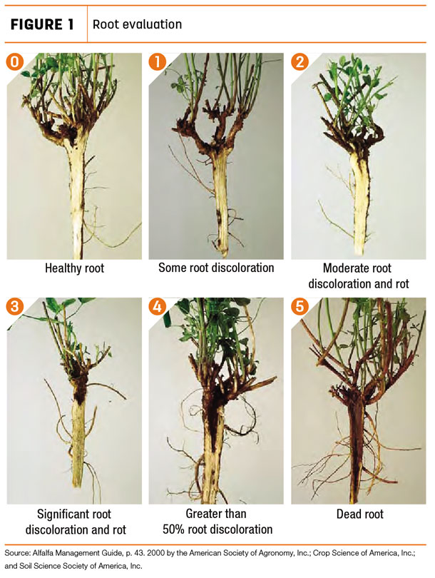 Root evaluation