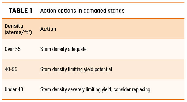 Action options in damaged stands