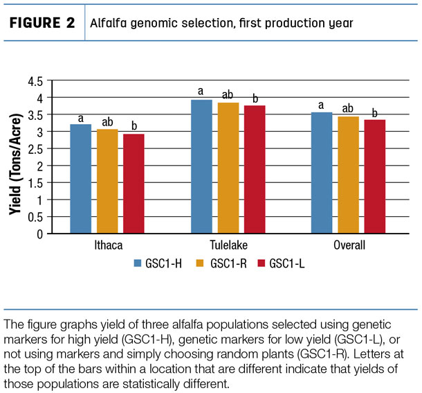 Alfalfa genomic selection, first production year