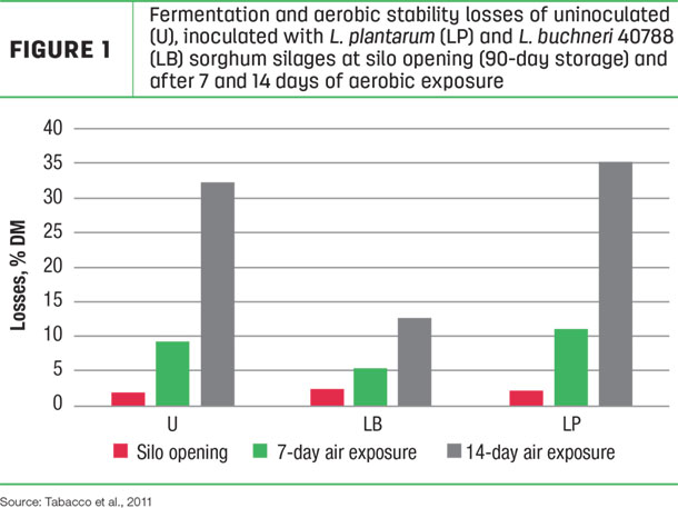 Fermentation and aerobic stability losses of unioculated, inoculated
