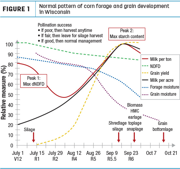 Normal pattern of corn forage and grain development in Wisconsin