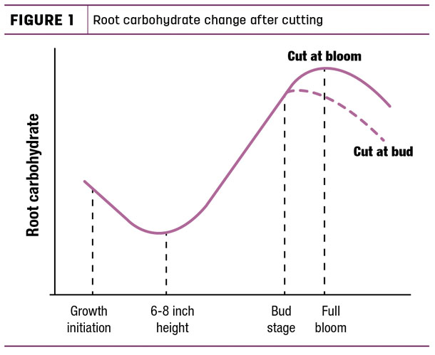 Root carbohydrate change after cutting