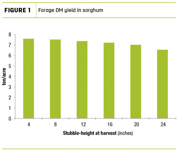 Forage DM yield in sorghum