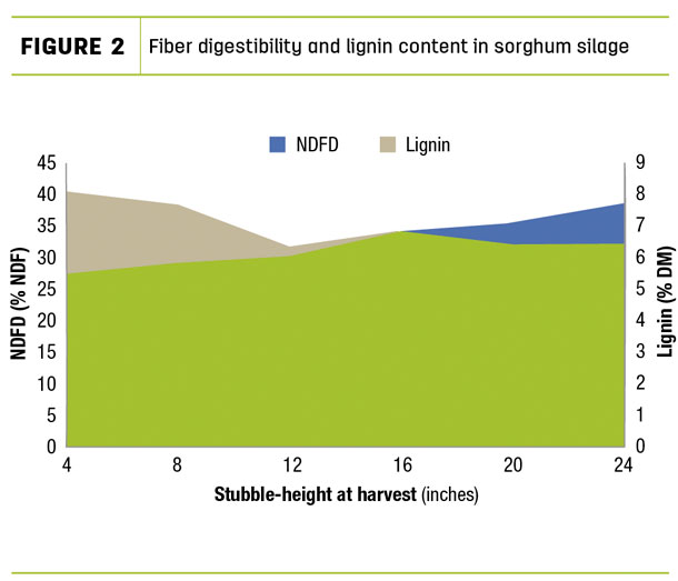 Fiber digestibility and lignin content in sorghum silage