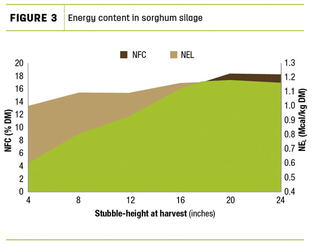 Energy content in sorghum silage