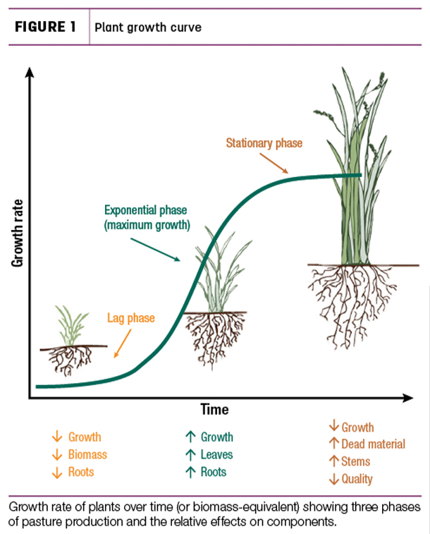 Plant growth curve