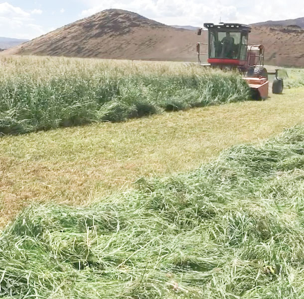 cutting dry conditions
