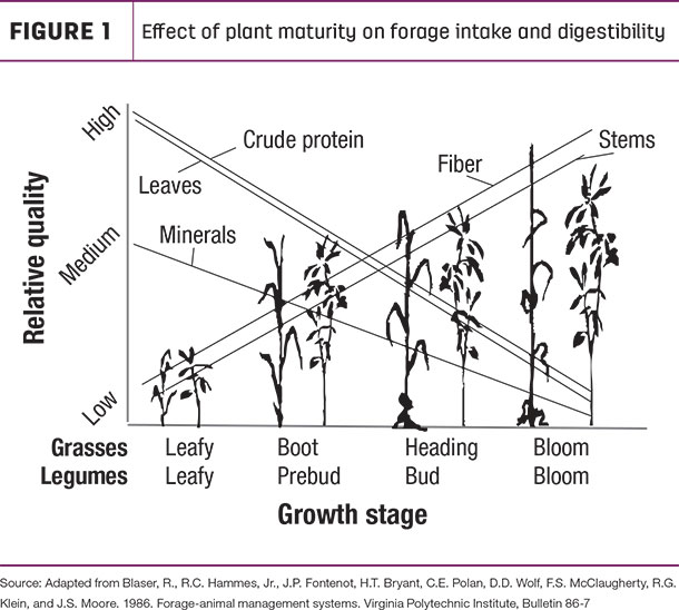 Effect of plant maturity on forage intake and digestibility
