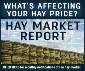 hay market report notification